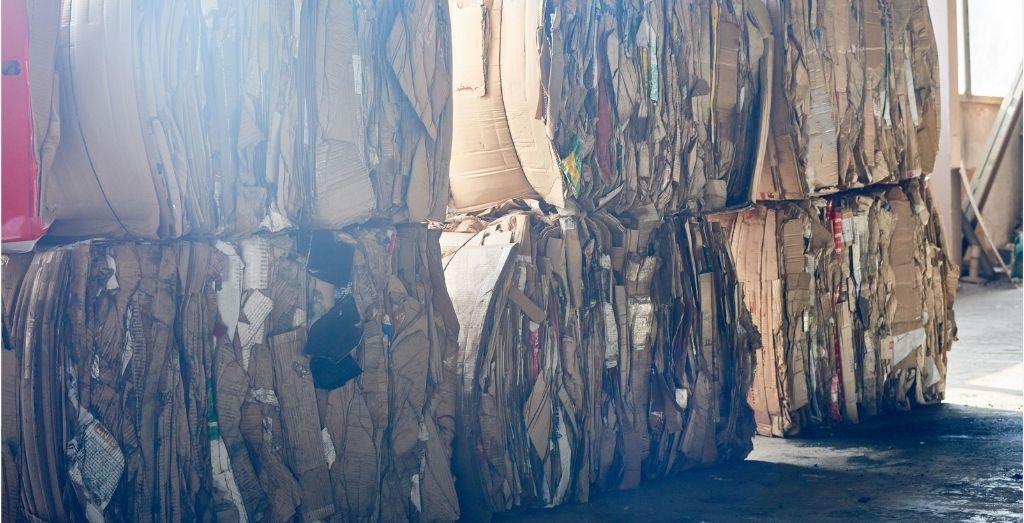 Cardboard Packs on Recycling Plant